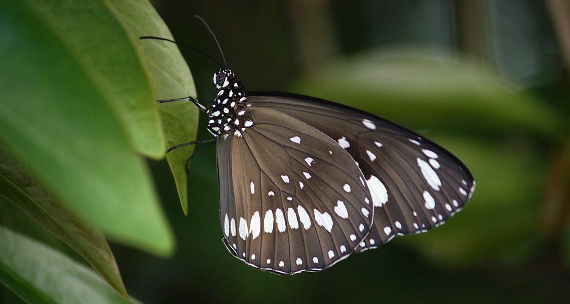 Sortie découverte de la faune et de la flore